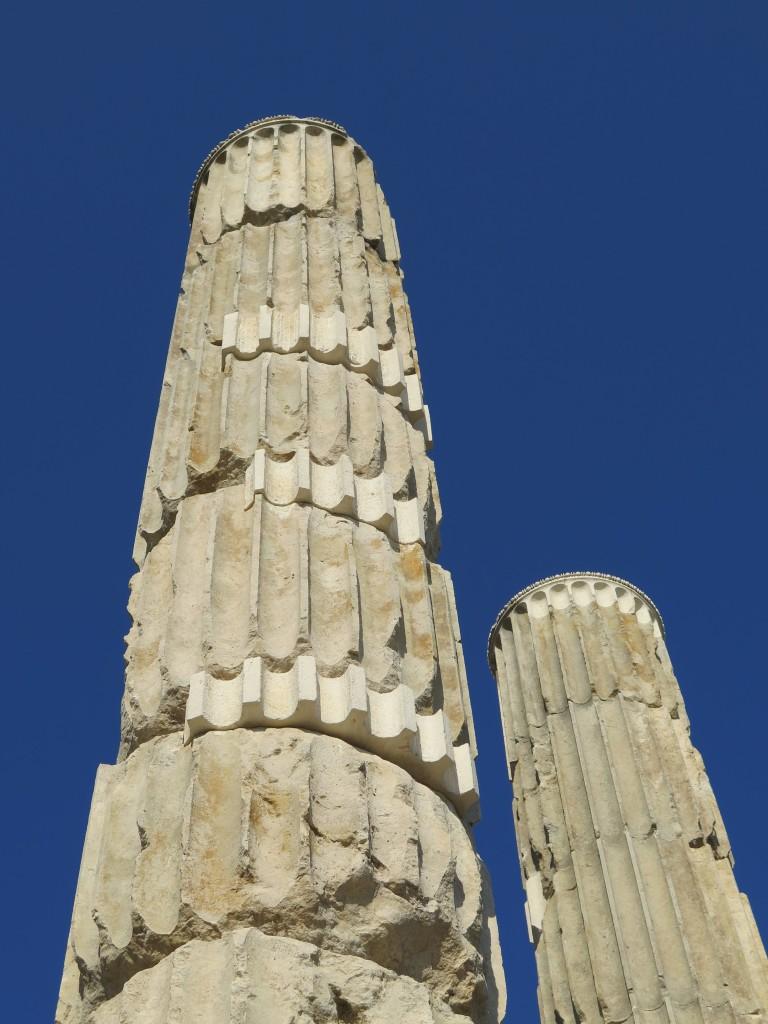 Bufale_Archeologiche_Gennaio_2015_Dario_Del_Bufalo Esco dell'UNESCO2